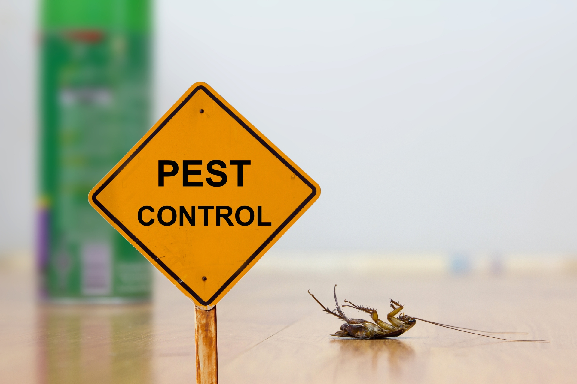 24 Hour Pest Control, Pest Control in Roehampton, SW15. Call Now 020 8166 9746