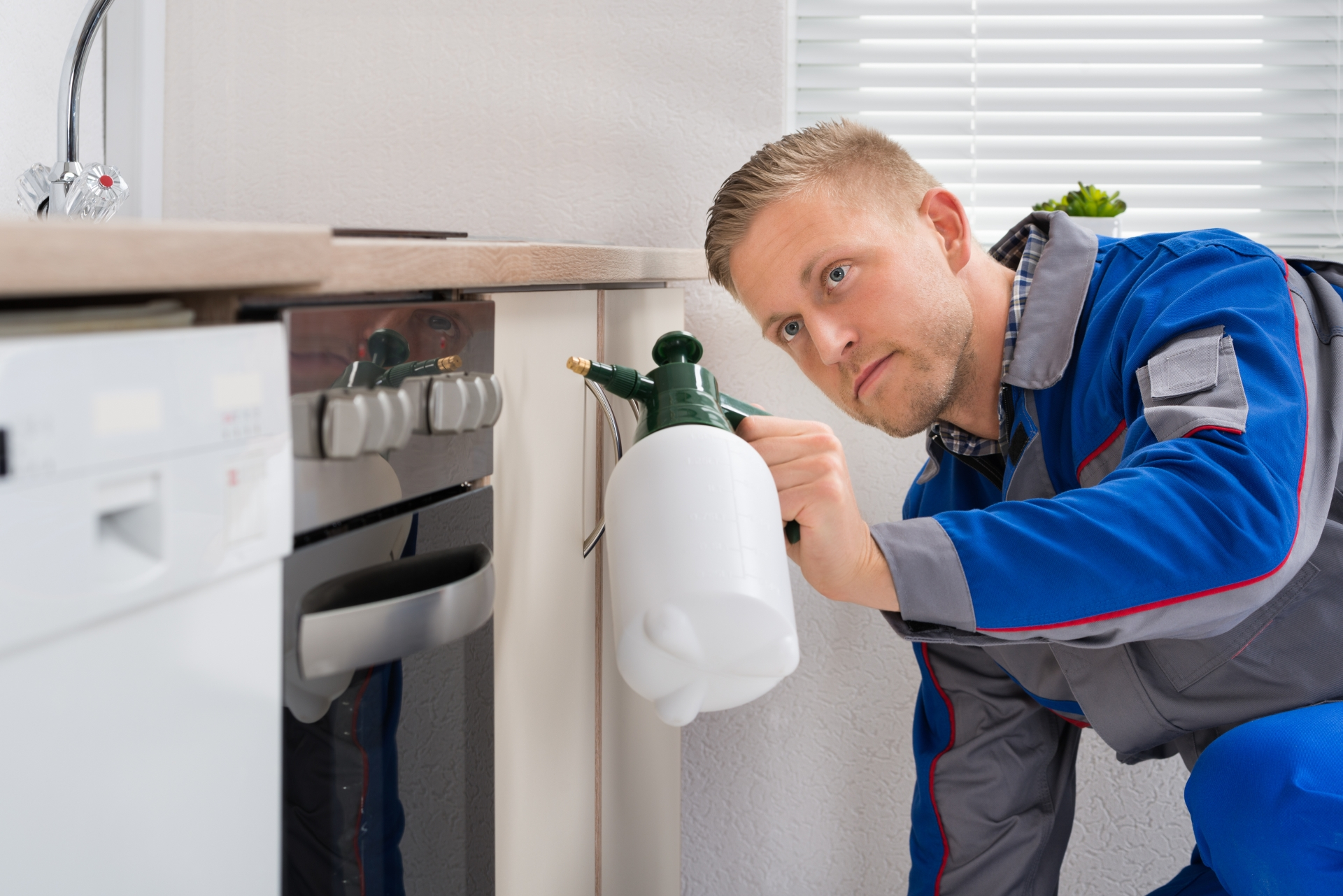 Pest Inspection, Pest Control in Roehampton, SW15. Call Now 020 8166 9746