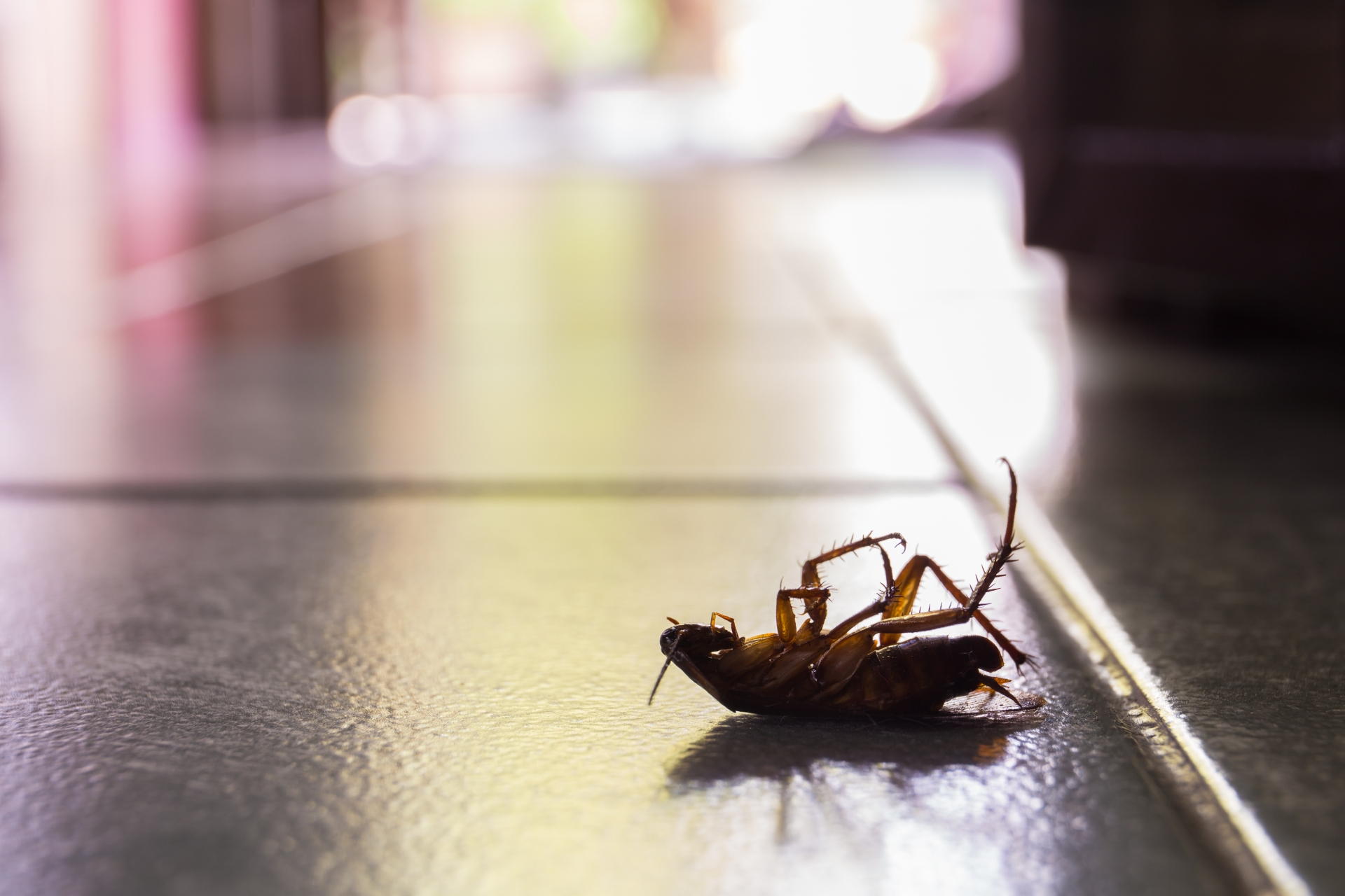 Cockroach Control, Pest Control in Roehampton, SW15. Call Now 020 8166 9746